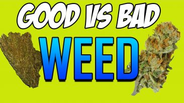 good bad marijuana weed